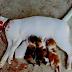 Subhanallah !!.. Kucing ini tetap menyusukan anaknya meskipun cedera dilanggar