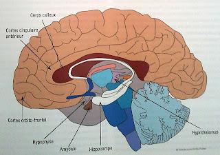 dessin enfant avec son cerveau comme une boîte