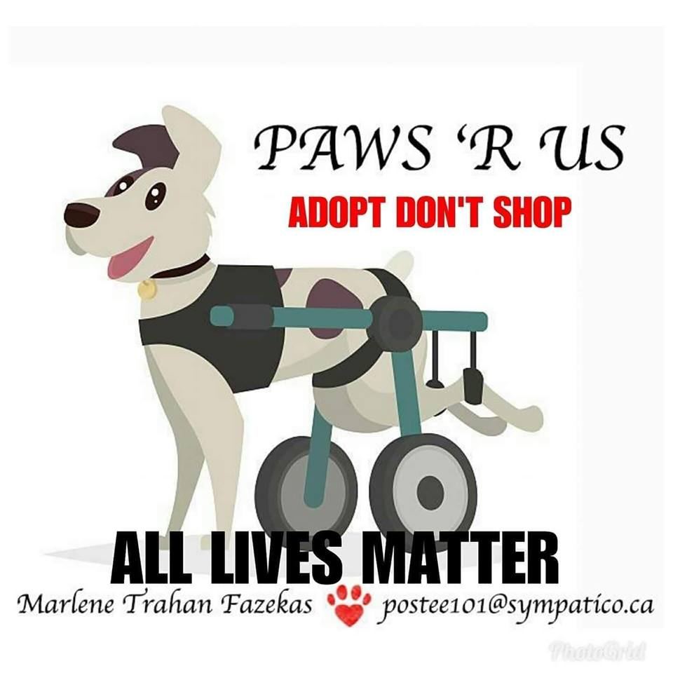 Email Us: pawsrusinfo@gmail.com