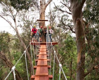 Tree Top Canopy Tours; 6 line zipline offers Free Child per adult spaecial price