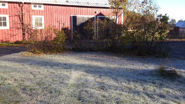 Frost, gräsmatta, frozen gras