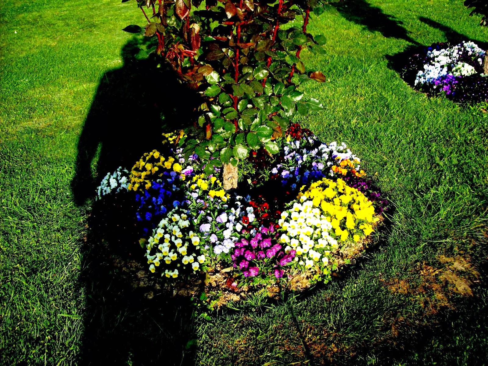 Iqbal Park Srinagar a Flowers Inside Iqbal Park
