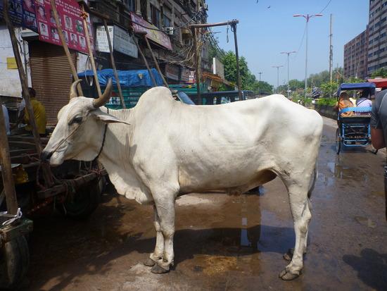 Commentari d'appendice > - Pagina 6 1.1316212044.sacred-cow
