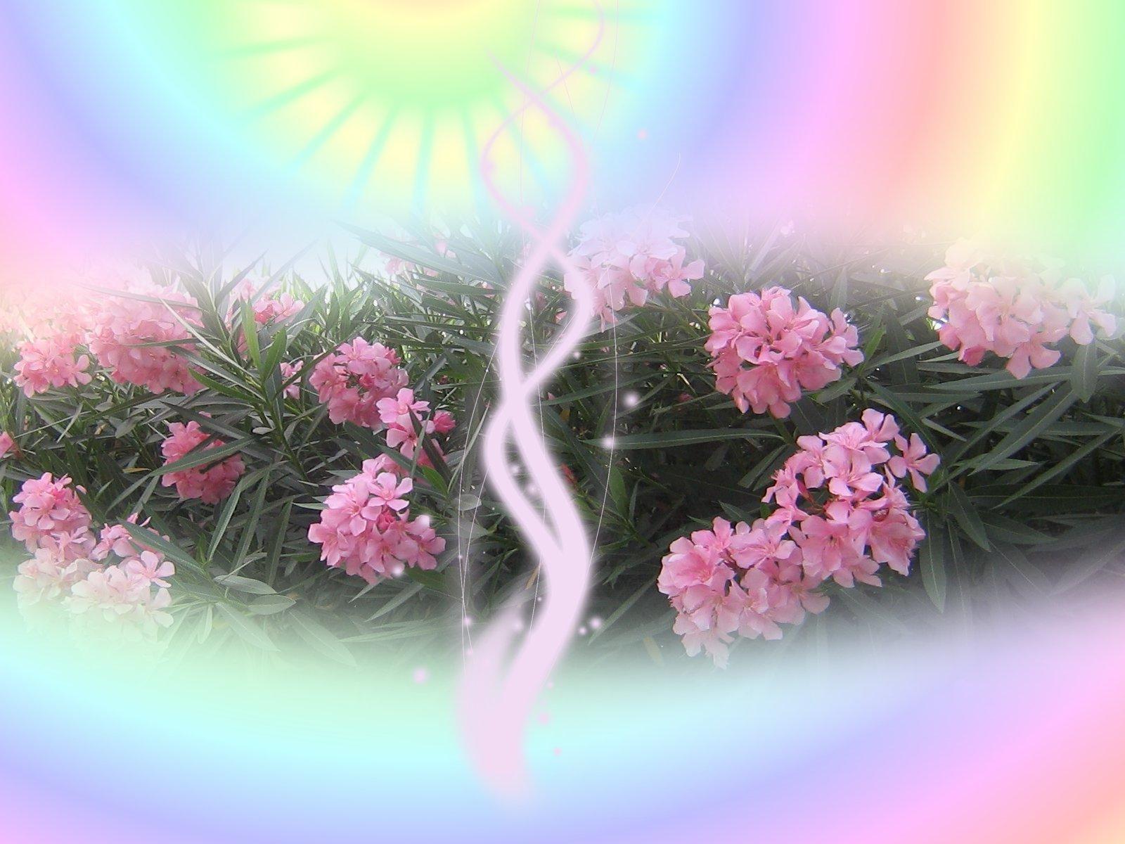 http://1.bp.blogspot.com/-IOINF-kZiXM/TaWtx4SPpgI/AAAAAAAACAc/QgBFNEKPibw/s1600/spring+wallpapers_%255Bwww.thewallpaperdb.blogspot.com+%255D_+%252841%2529.jpg