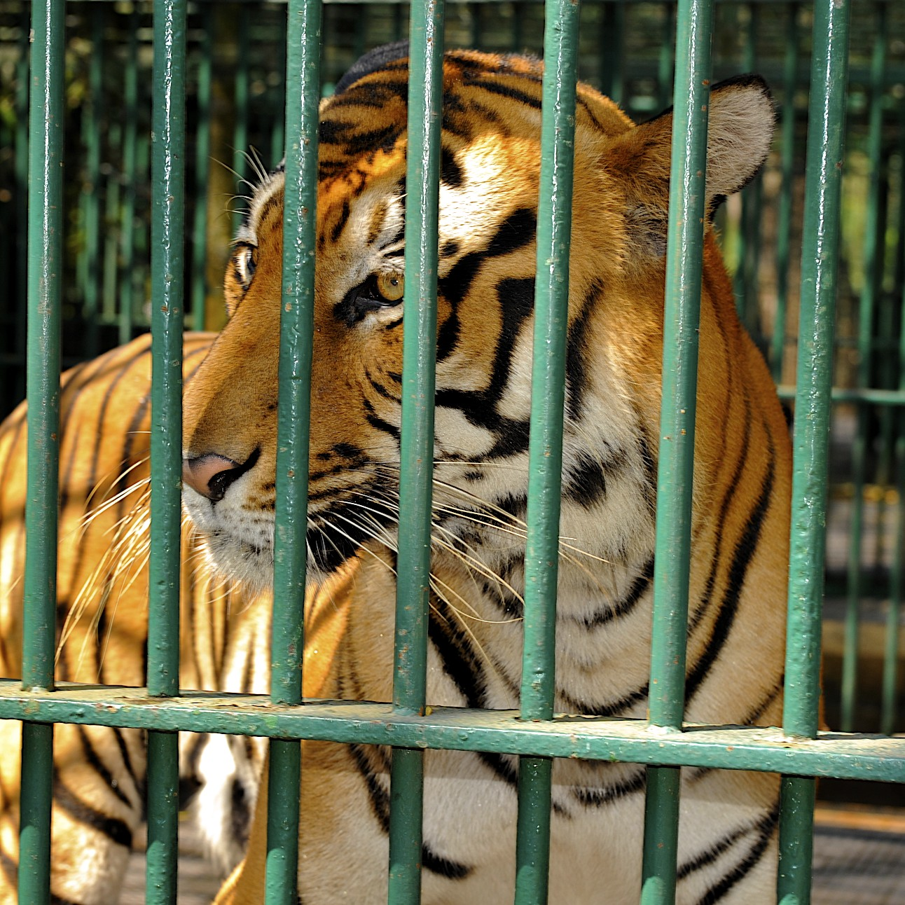 zoo essay in sanskrit