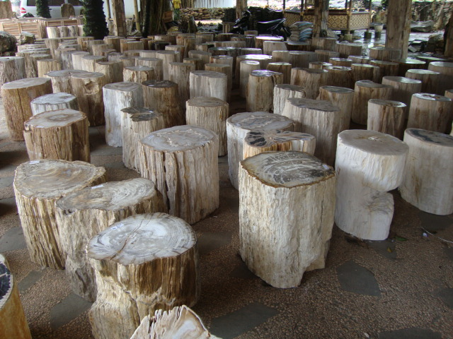 Petrified Wood for sale from IndoGemstone.com. The rough stone material we  use to make the Petrified Wood products from is fossil tree stumps and logs.
