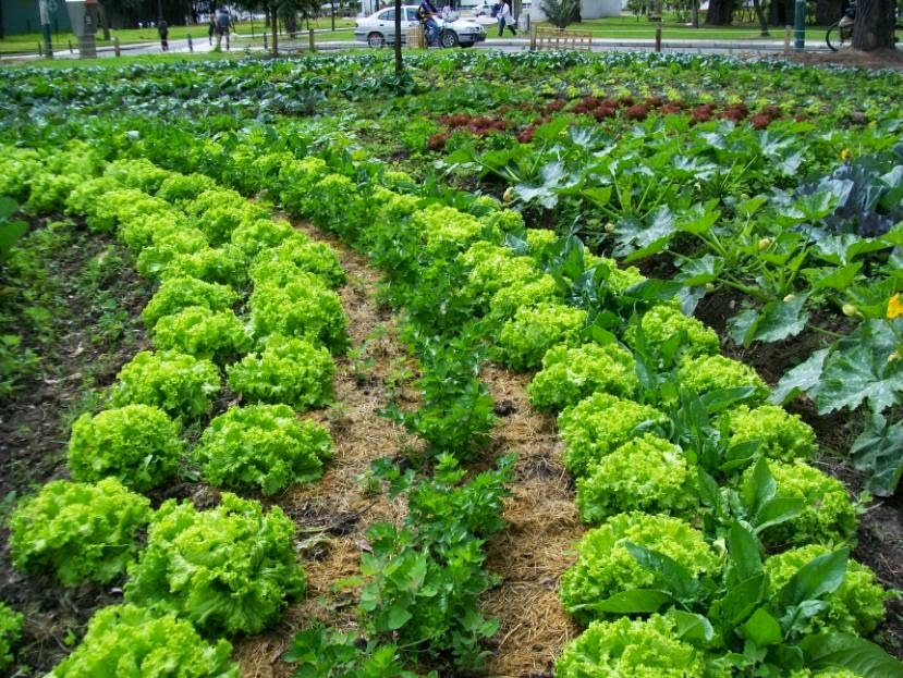 Cultivar el huerto casero beneficios de la asociaci n de for Que plantas se siembran en un huerto