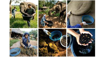 elephant coffee, kopi luwak, organic coffee, kopi luwak bali