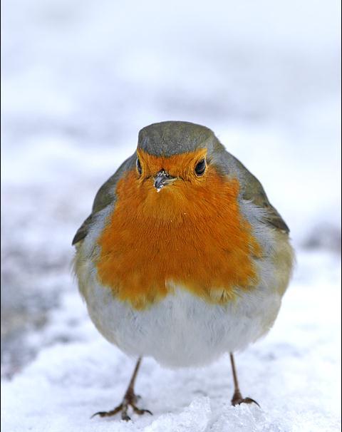 Emmebyrock inverno aiutiamo gli animali musica della - Animali in inverno clipart ...