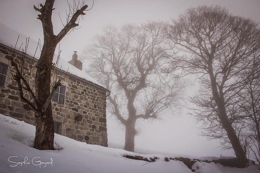 brouillard photographie