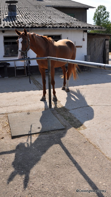 Horse and his Shadow
