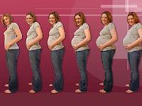 la grossesse explications