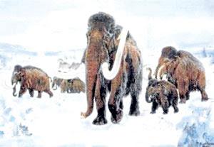 Saintis cuba klonkan gajah purba
