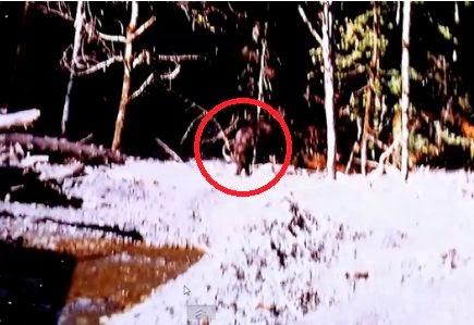 Bluff Creek Patty Massacre Theory