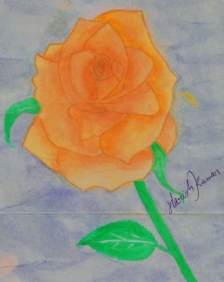 Water Color Drawing of Rose