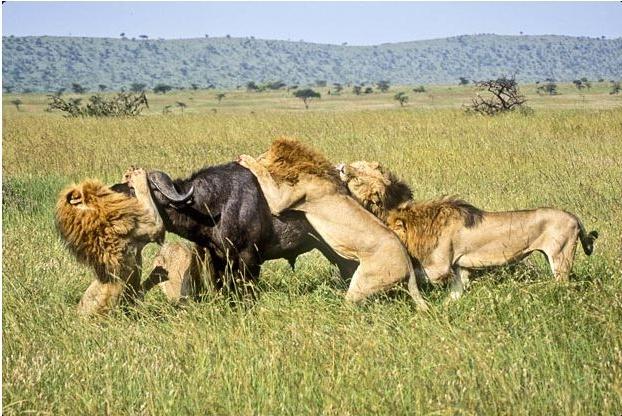 спаривание разных животных картинки