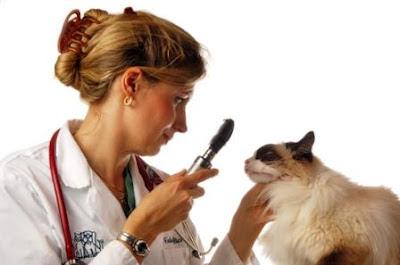 Enfermedades que le pueden dar a Perro y Gatos