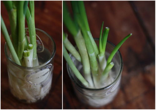 Growing+scallions+in+water