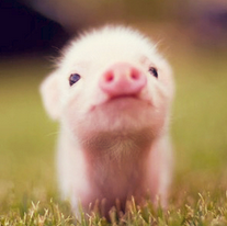 U love style d cembre 2012 - Image de cochon mignon ...
