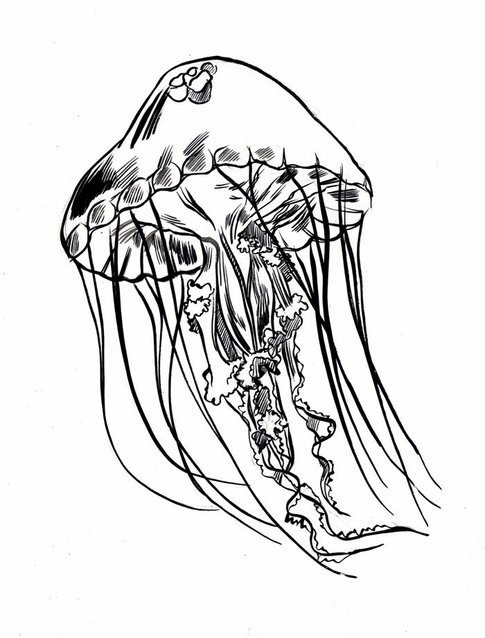 jellyfish sketch brush and ink