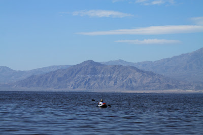 Lady hump west shores salton world for Salton sea fishing report