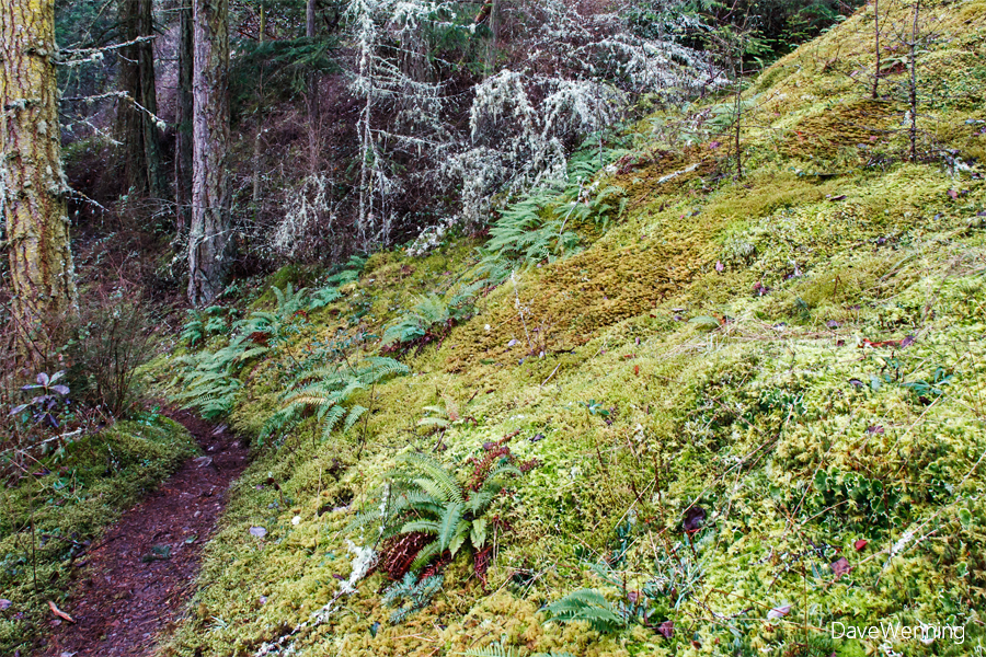 Ginnett Hill Trail, Deception Pass State Park