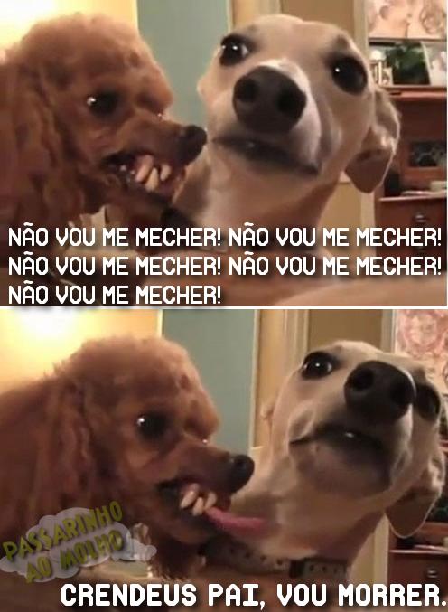 cachorrinhos irridatos, briga de cachorro