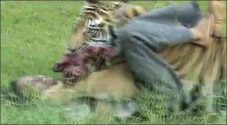 Harimau Makan Orang