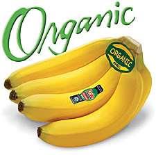 Para pequeno produtor a bananeira orgânica é bom negócio