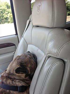 Fotos de Cachorros nos carros de seus Donos
