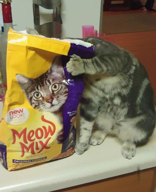 Fotos tiradas no momento exato - Gato brincalhao
