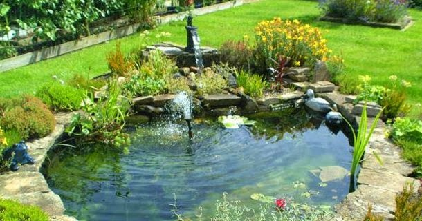 How to make your backyard garden pond design a success for Garden duck pond design