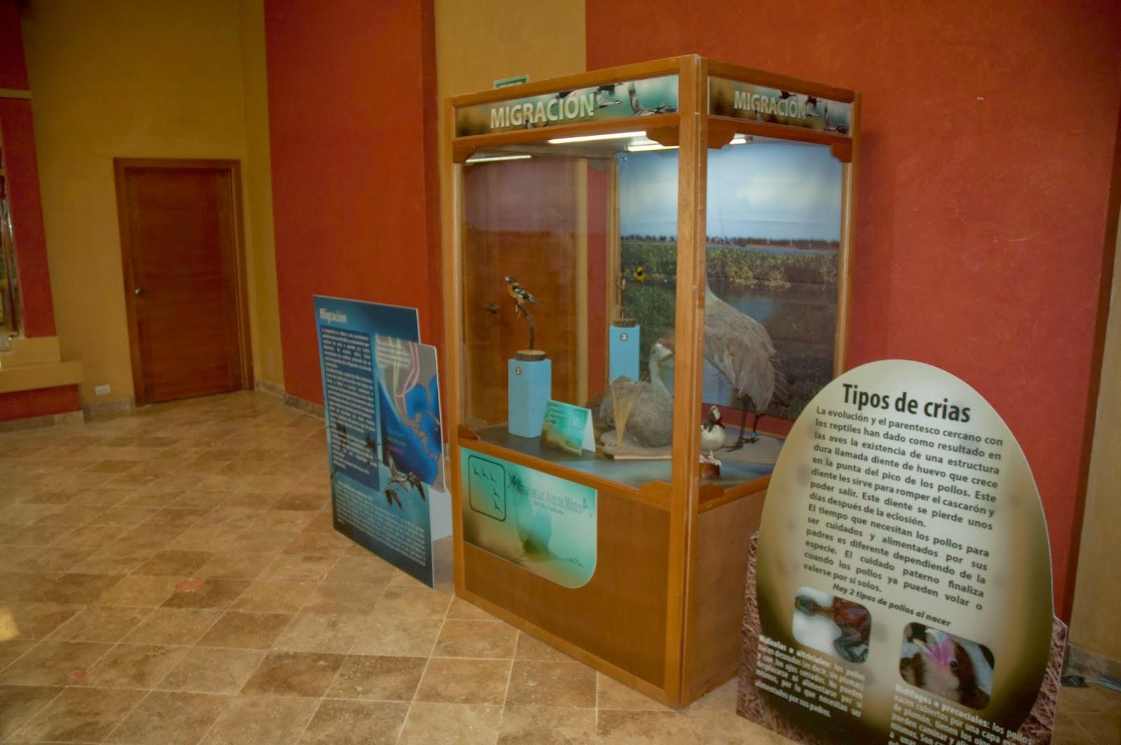 Museo Itinerante