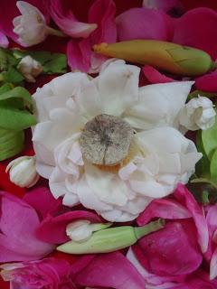 Mustika Bunga Jamur Bertuah