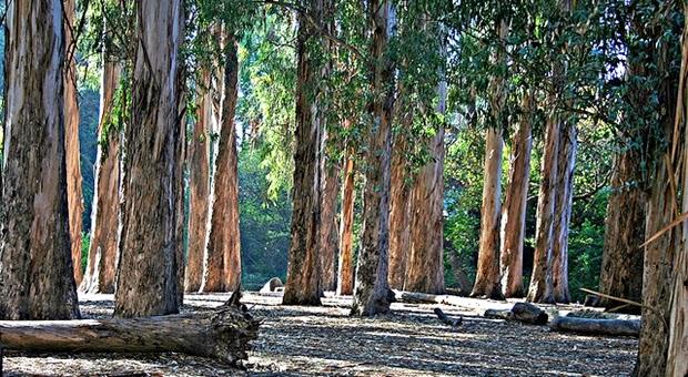 10 Pohon Terunik Dan Aneh Di Dunia