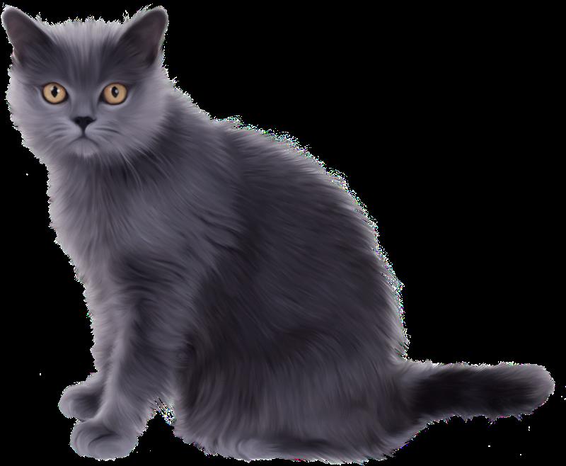 Cosas para photoscape im genes para photoscape photoshop for Red transparente para gatos