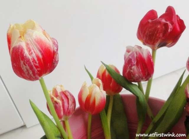 Tulips from the Netherlands