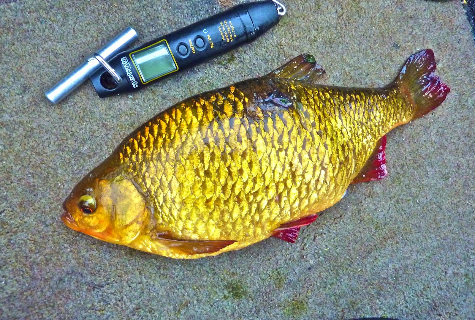 Hugh miles wildlife adventures a passion for angling for Do all fish have scales