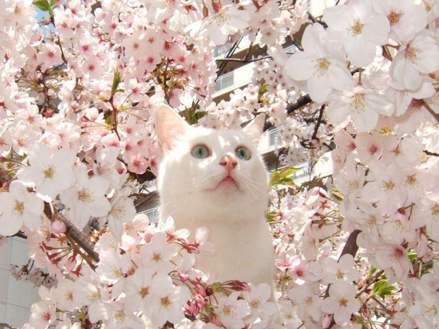 flower cat, funny cats, cat photos, cat pictures