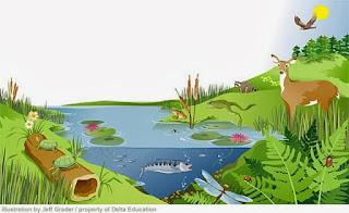 organisasi kehidupan tingkat ekosistem