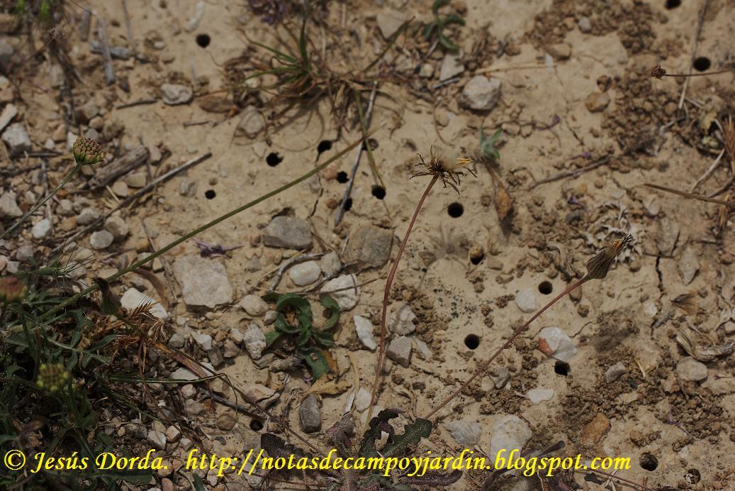 Eliminar avispas del jardin interesting como acabar con for Como acabar con las hormigas del jardin