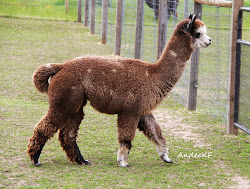 "My alpaca ""Blue"""
