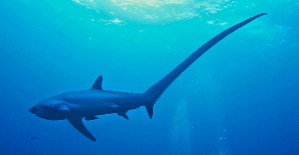 duiken haaien zuid afrika