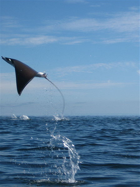 Free images online amazing sea animals for Amazing ocean images