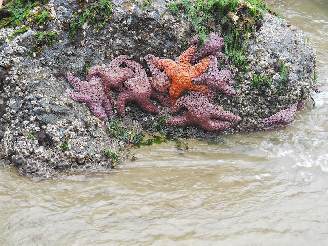 intertidal zone at Cannon Beach