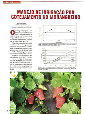 Manejo de irrigação por gotejamento no morangueiro