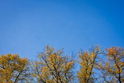 Autumn Leaves Berlin