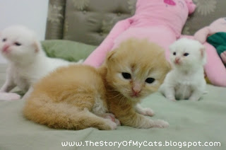 kucing umur 3 minggu