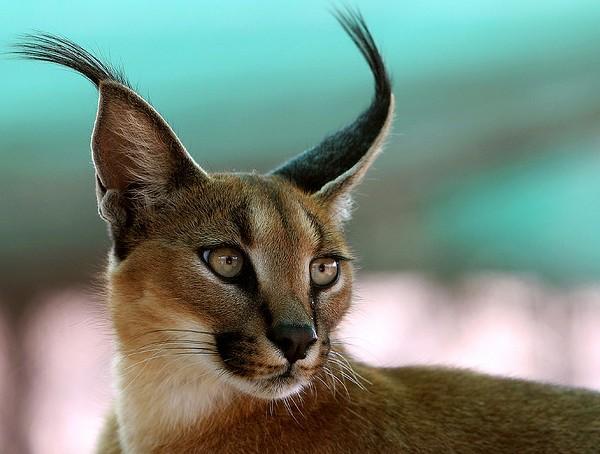 Kedvenc fotóink, háttérképeink Animal+%288%29
