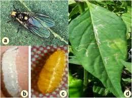 obat cara membasmi lalat